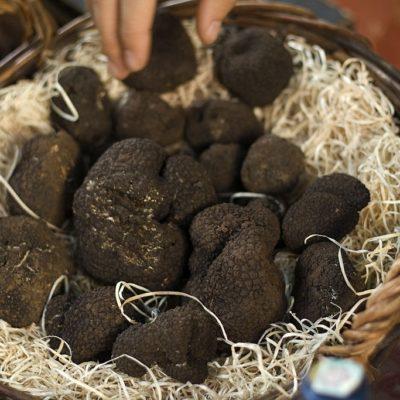 como conservar trufa negra fresca