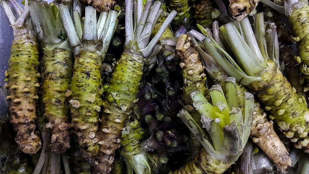 raiz de wasabi fresca