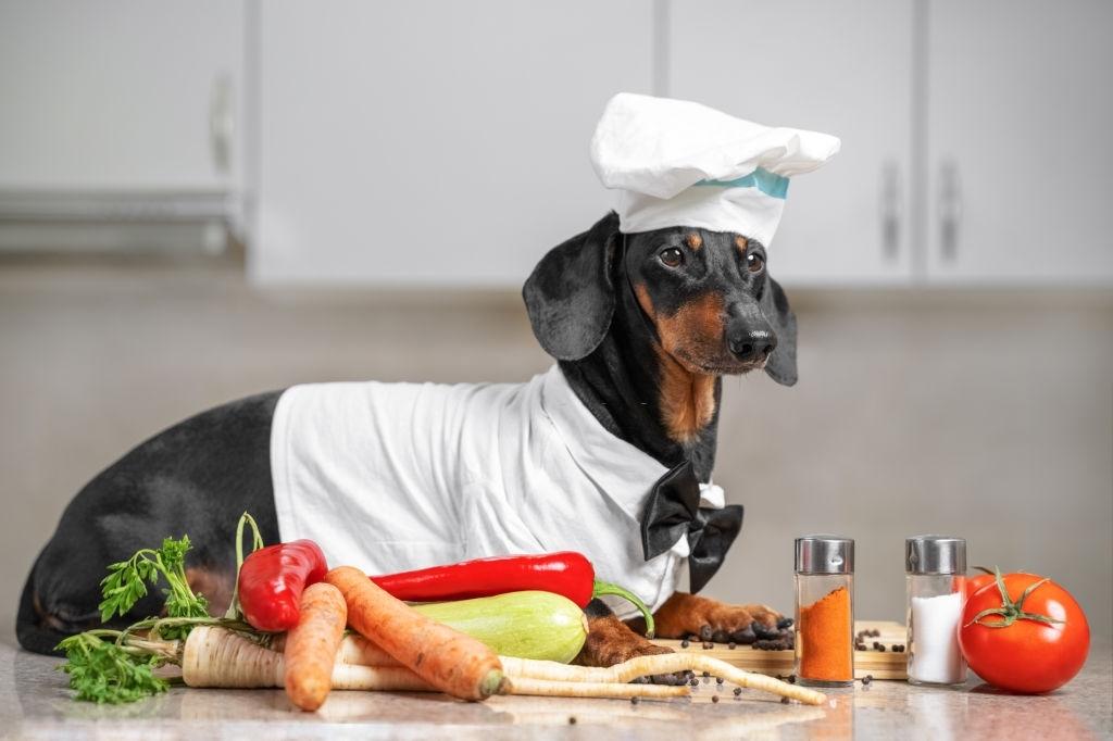Recetas para Perros | 🐕 Galletas, Magdalenas y BARF | Comida Casera