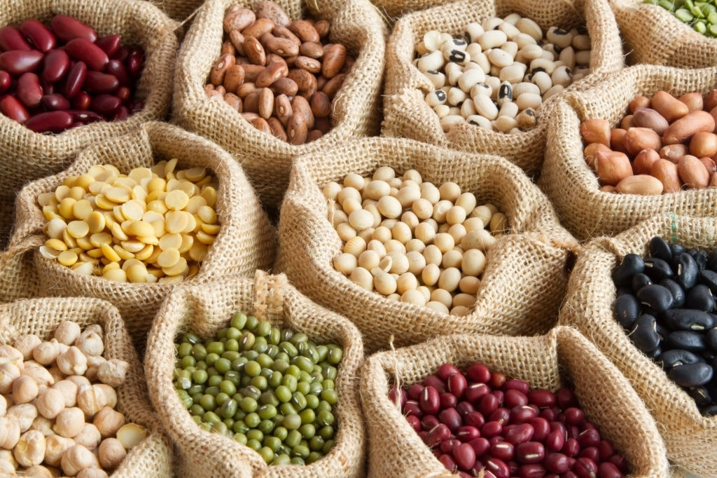 Alimentos Ricos en Proteína Vegetal para Dietas sin Carne